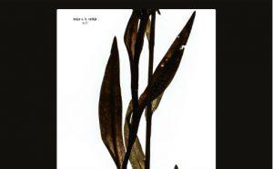 """Utsnitt av albumcoveret til """"Sult"""". Coveret er designet av Kim Hiorthøy"""